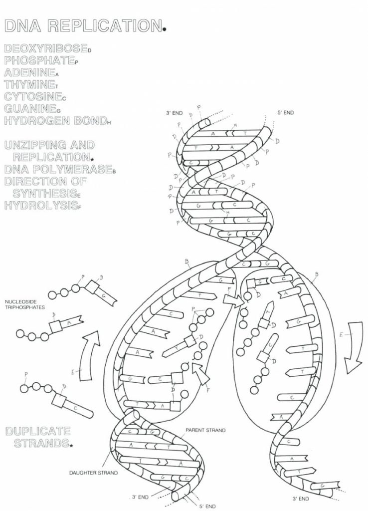 Dna Drawing Labeled At Getdrawings Com