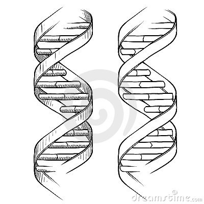 Dna Ladder Drawing