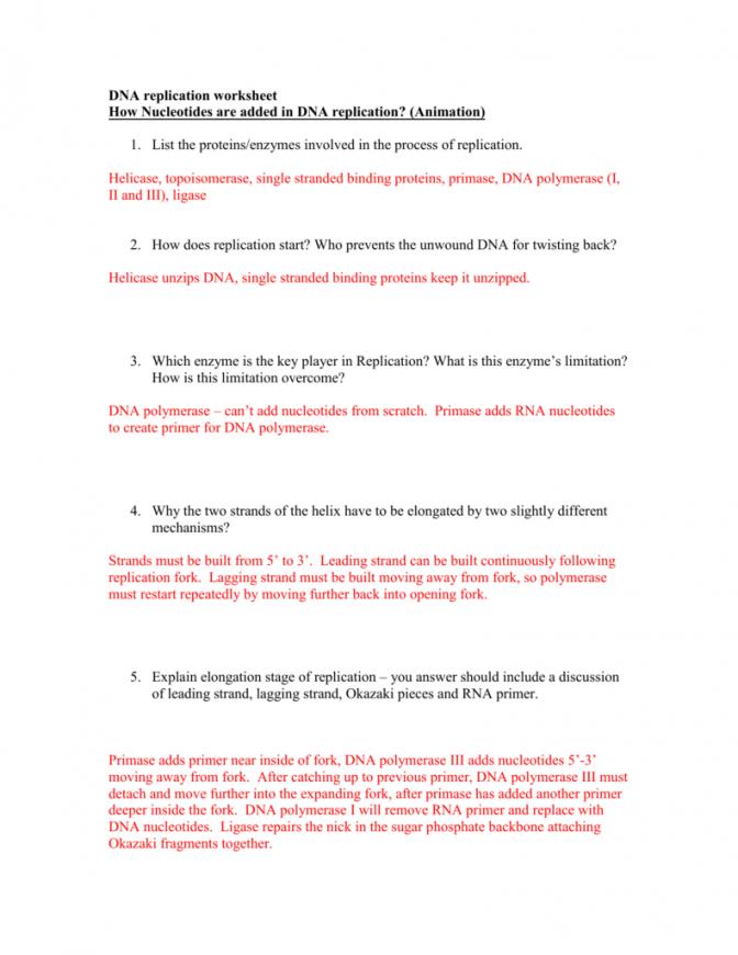 672x870 Worksheet Dna Replication Worksheet Key Idea Of Dna Replication