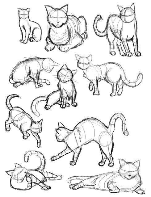 489x638 Imagen De Article, Sketch, And Cat Ideas Para Dibujar