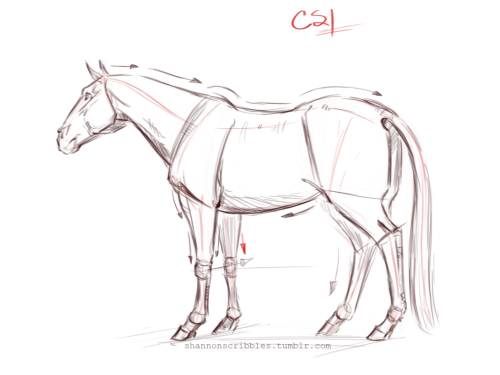 500x375 Horse Demos For The Animal Drawing Course. Drawing Course