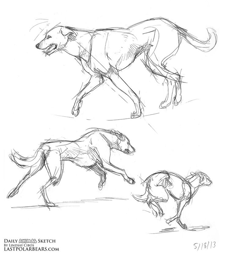 736x833 353 Best Drawings Images On Draw Animals, Drawing