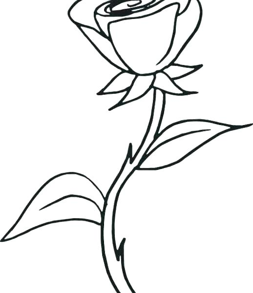 518x600 Coloring Roses Nice Roses Coloring Pages Nice Unknown Dying White