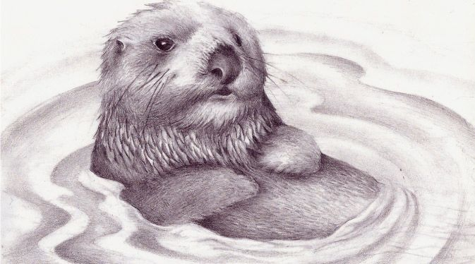 673x374 84 Best Otters Images On Otter, Otters And Figurine