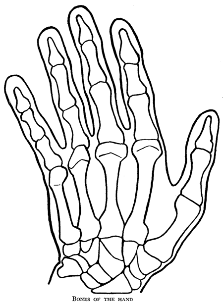 Drawing Of A Skeleton Hand
