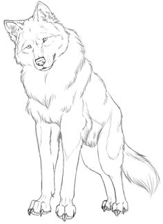Drawing Of A Wolf Sitting