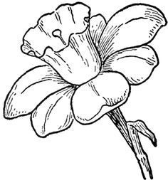 Drawing Of Different Types Of Flowers At Getdrawings Com Free For