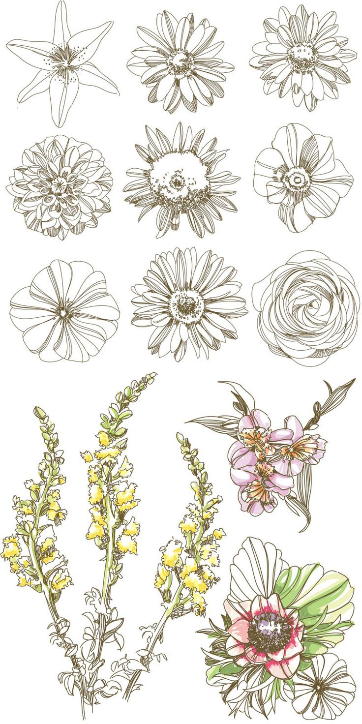 736x1472 Different Types Of Flowers Sketches Different Flowers Sketch