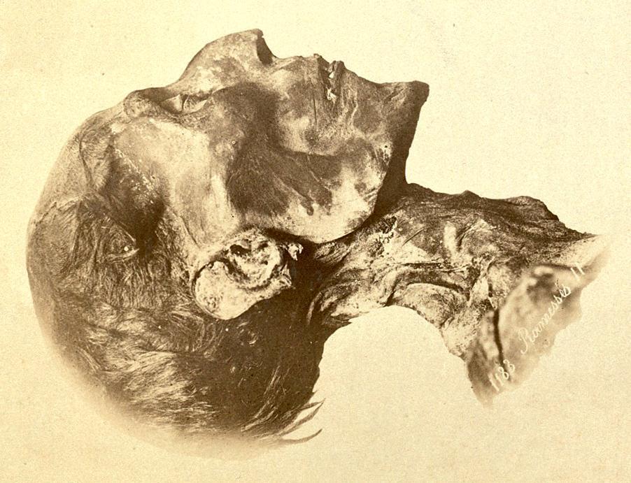 902x691 9 Strange Uses For Ancient Egyptian Mummies Mental Floss