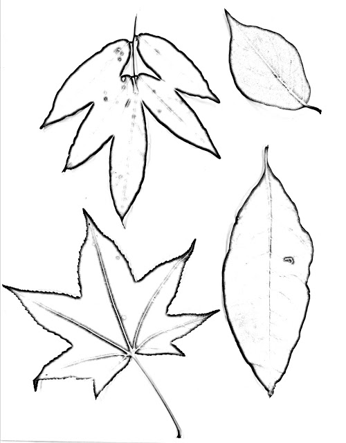 500x640 The Helpful Art Teacher Drawing Magnified Leaves Finding The Details