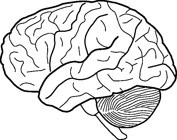 Drawing of the brain with labels at getdrawings free for 600x475 dorable brain diagram to label elaboration ccuart Image collections