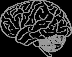 299x237 Drawn Brain Unlabelled