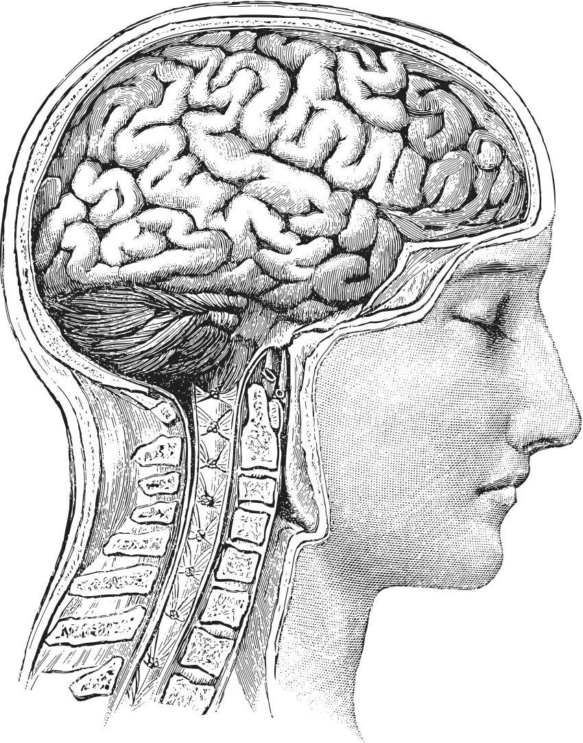 850x1083 Collection Of Vintage Brain Drawing High Quality, Free