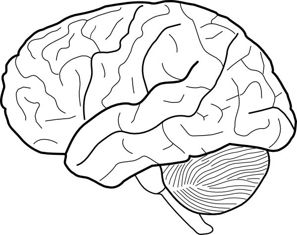 600x475 Pictures Template Of The Brain,