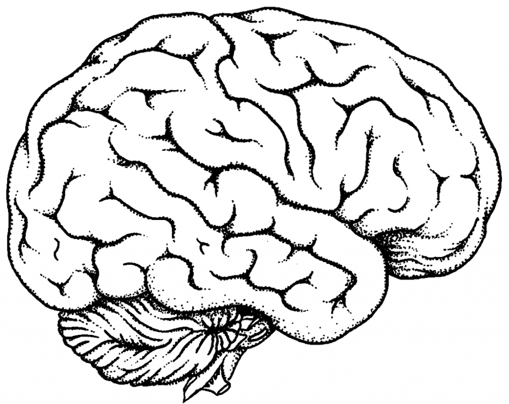 1024x812 Simple Drawing Of Brain