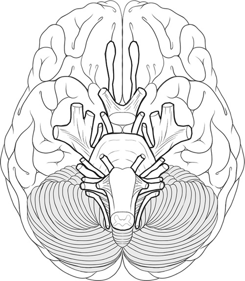 500x574 Blank Brain Diagram To Color