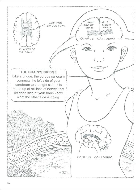 photo relating to Brain Hat Printable identified as Drawing Upon The Immediately Aspect Of The Thoughts Pdf at GetDrawings