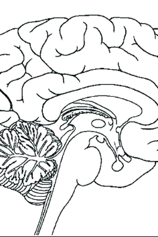 The Human Brain Coloring Book Pdf