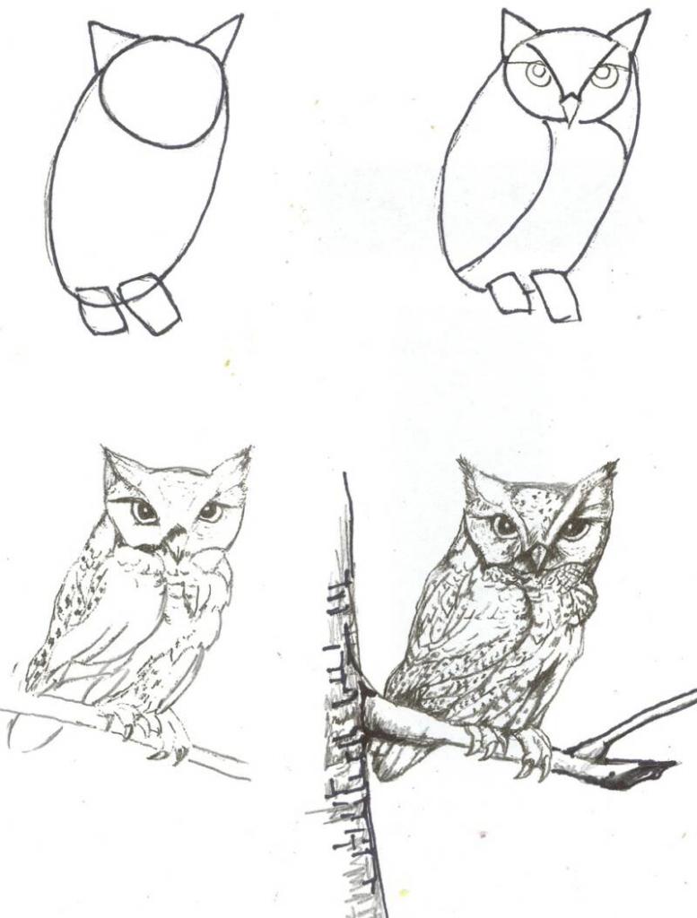 777x1024 Drawing Animals Using Geometric Shapes Drawing Animals Using