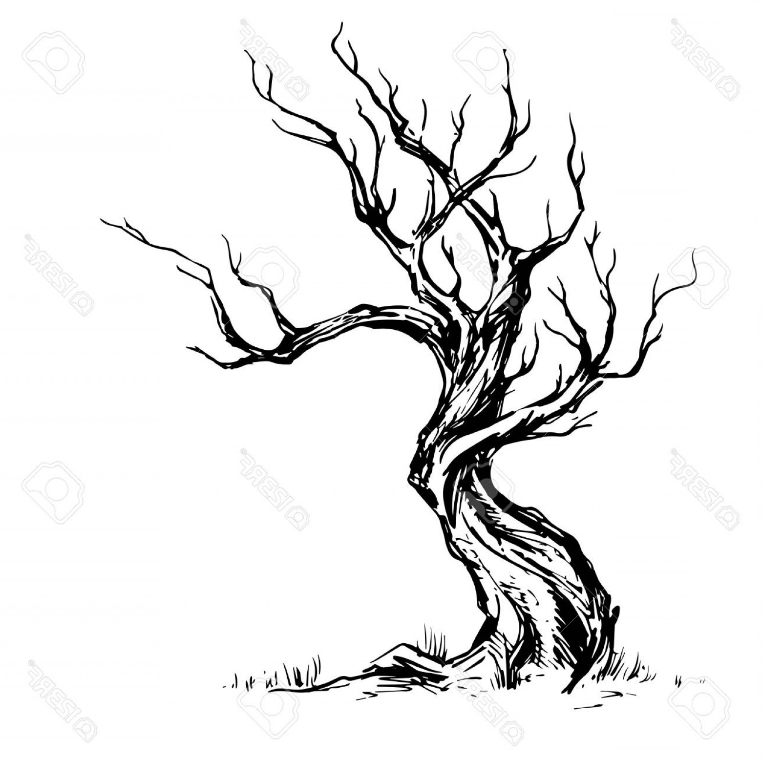 1560x1558 Photostock Vector Hand Sketched Illustration Of Old Crooked Tree
