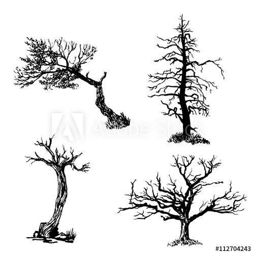500x500 Drawing Collection Set Of Four Trees Isolated Dry Ink Brush Sketch