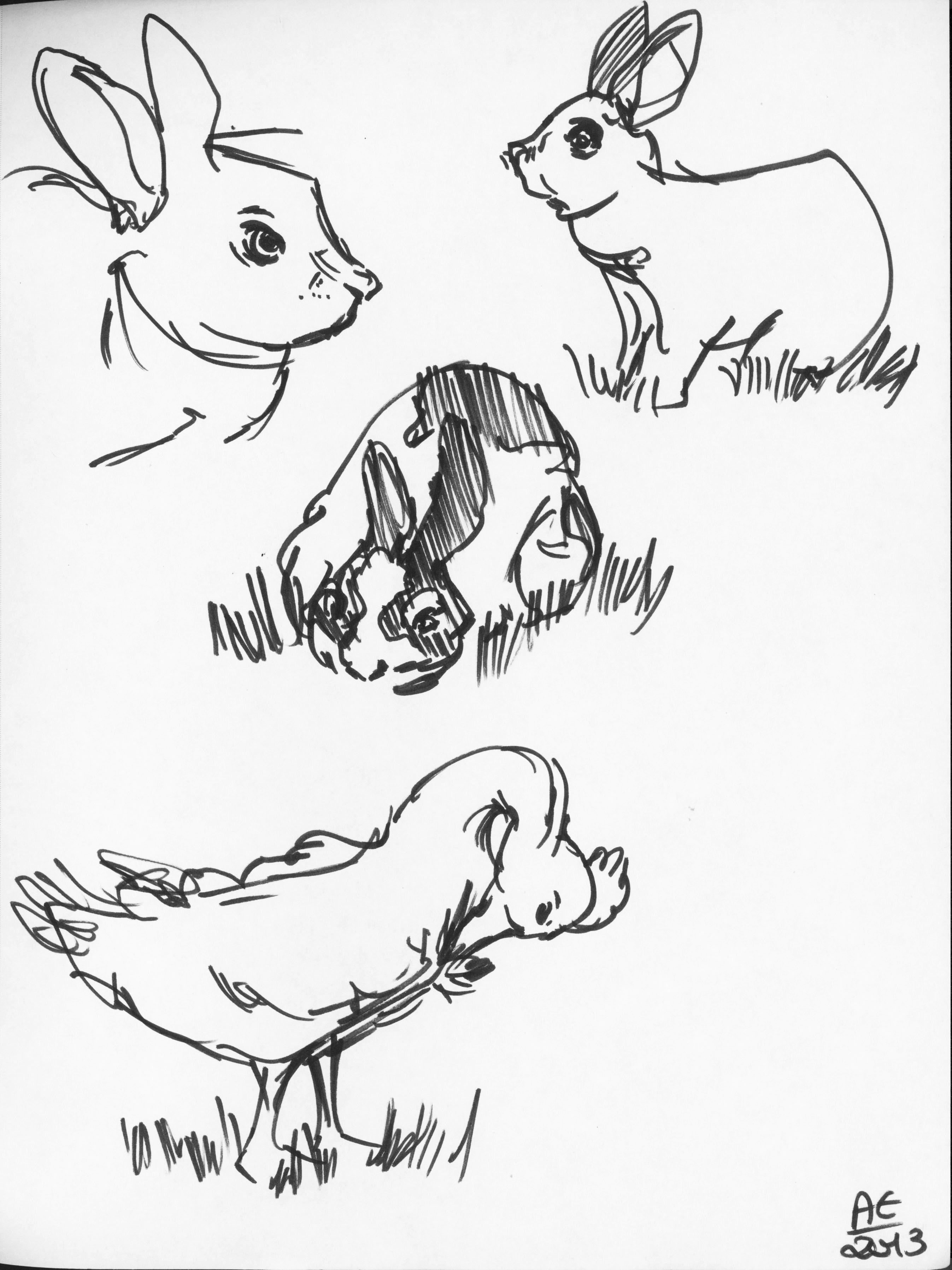 2694x3594 Walt Disney Family Museum Cute Farm Animal Drawings Angela