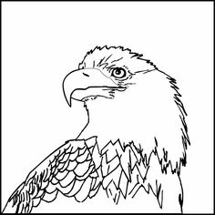 236x236 Bald Eagle Drawings And Coloring Pages! Bald Eagle