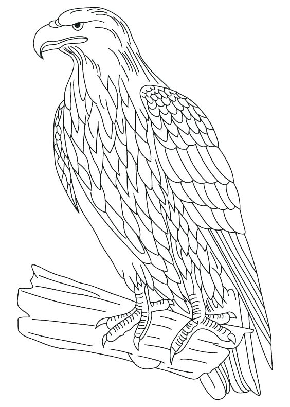 564x791 Coloring Pages Of Bald Eagles Bald Eagle Coloring Page Bald Eagle