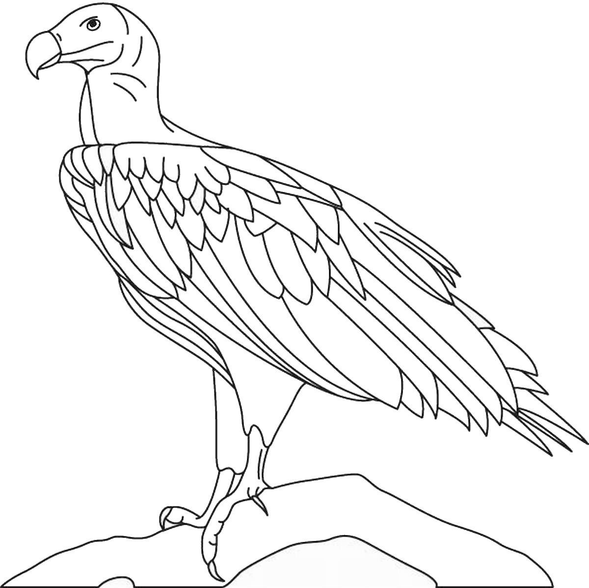 1200x1198 Eagle Coloring Pages