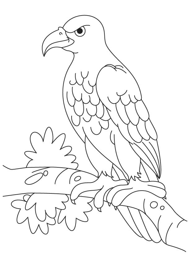 613x860 Eagle Pictures To Color 486231