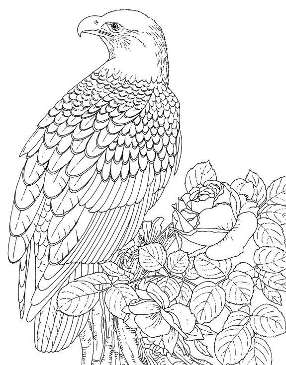 575x735 3d Coloring Pages For Adults Of An Eagle Resting Online