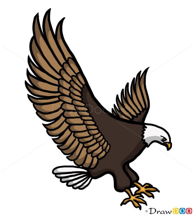 665x738 346 Best Eagle Drawing And Painting Images On Eagle