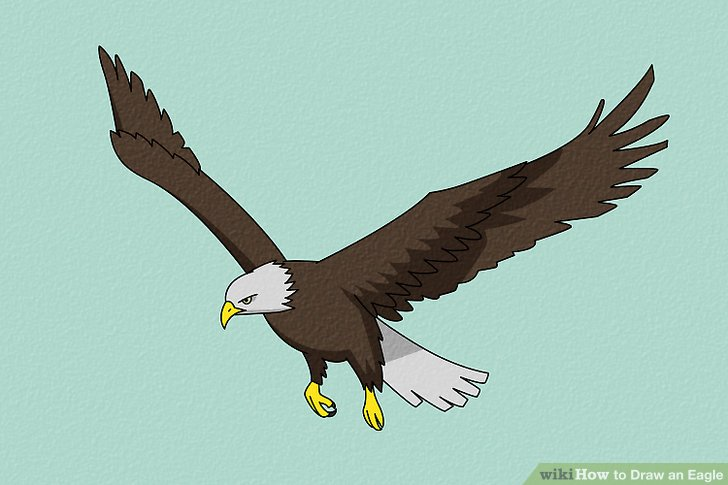 728x485 4 Ways To Draw An Eagle