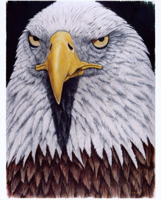 322x400 76 Best Colored Pencil Drawings Images On Colored