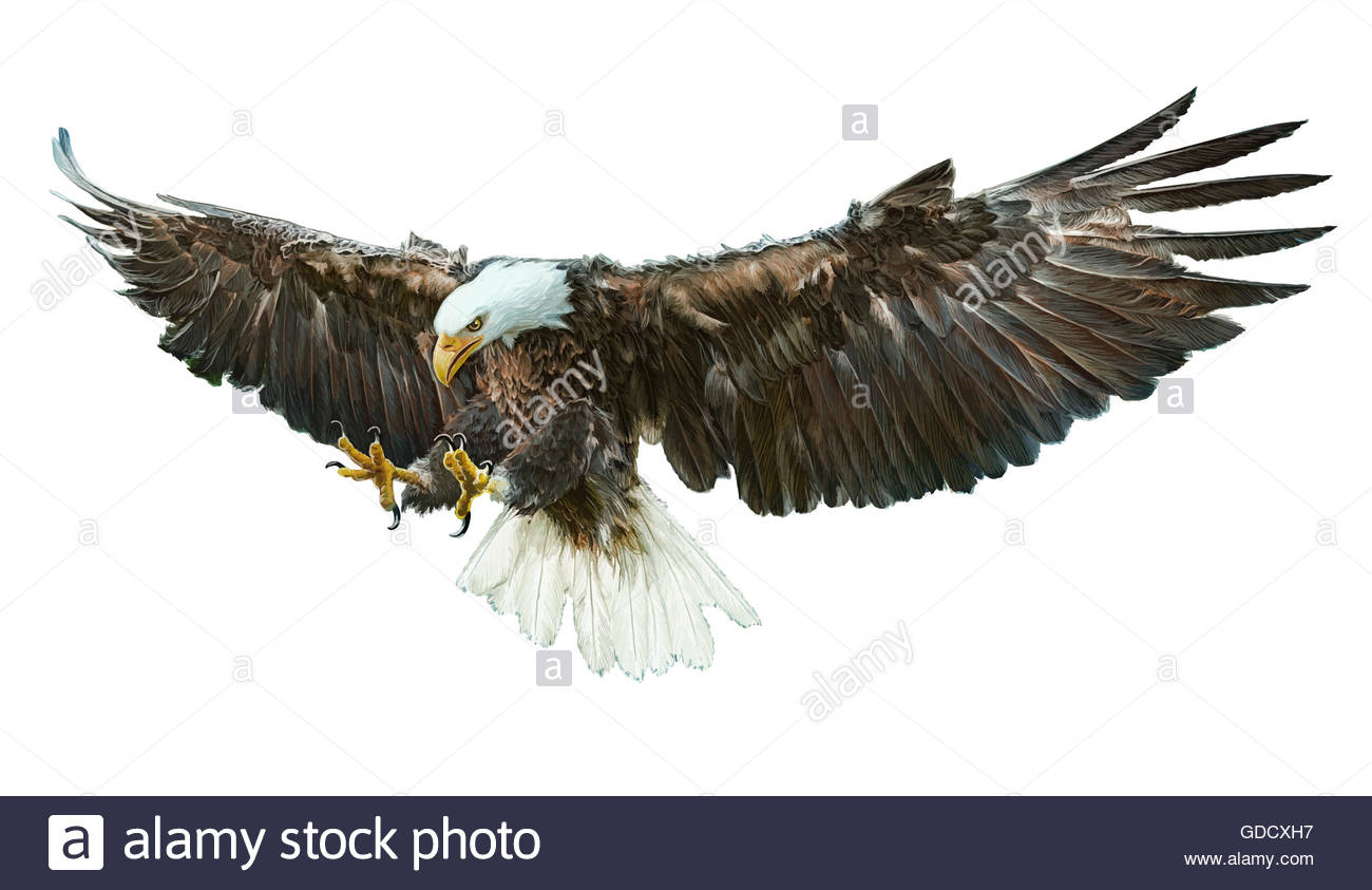 1300x843 Bald Eagle Winged Hand Draw And Paint Color Illustration Stock
