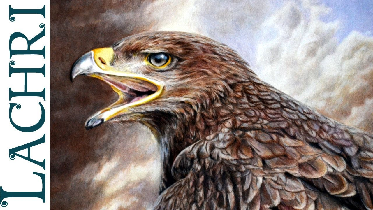 1280x720 Drawing An Eagle W Faber Castell Polychromos Colored Pencil