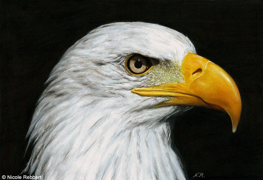 900x614 Eagle Drawing By Quelchii