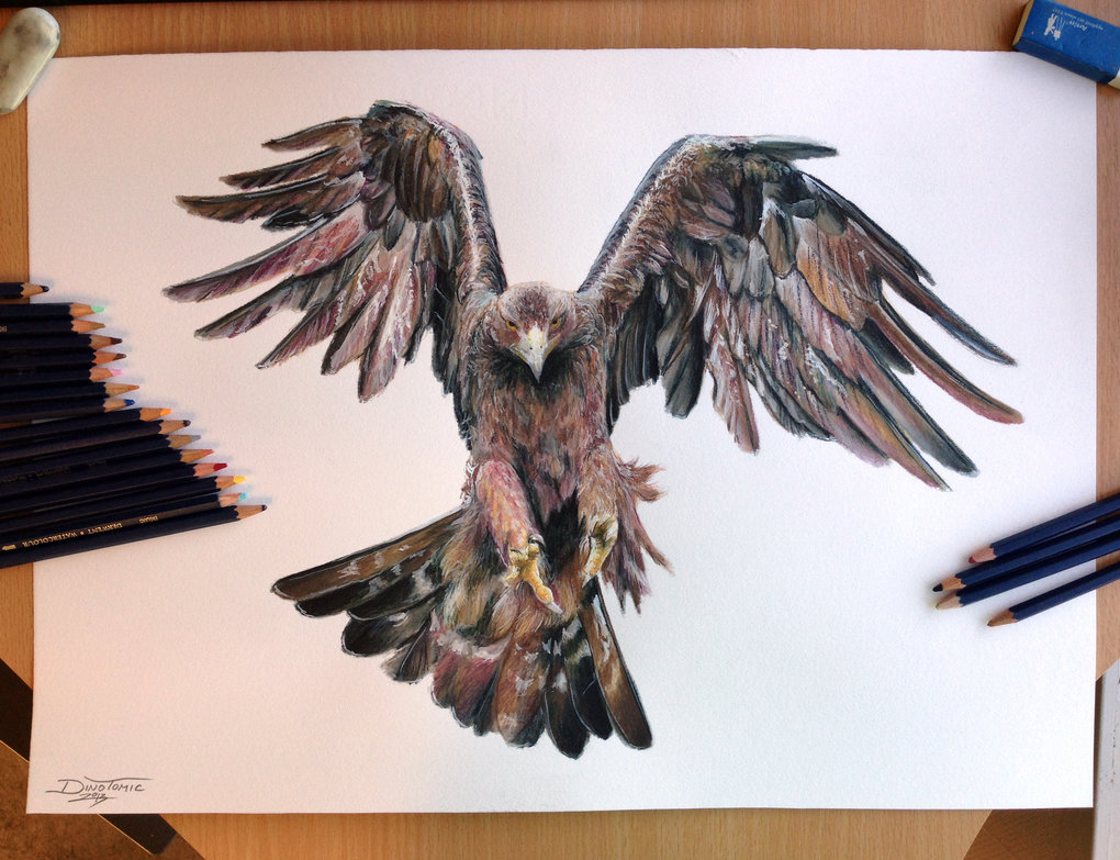 1020x783 Golden Eagle Color Pencil Drawing By Atomiccircus