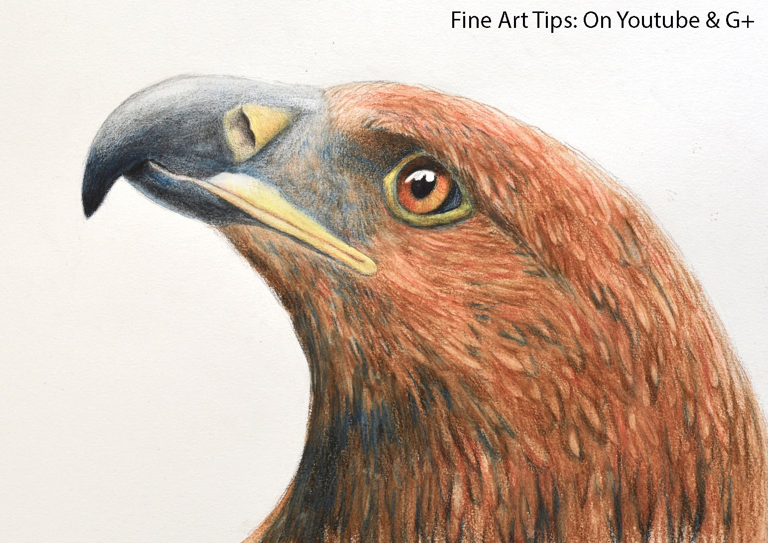 1542x1090 How To Draw An Eagle's Head With Watercolor Pencils