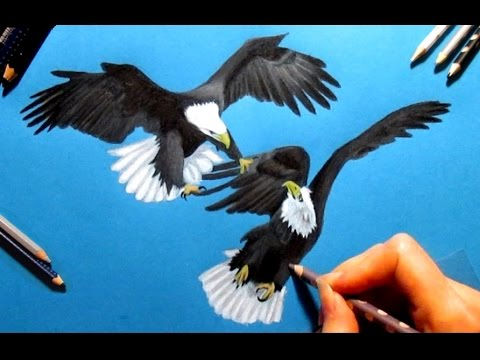 480x360 Speed Drawing 2 Bald Eagles, Colored Pencils On Blue Paper
