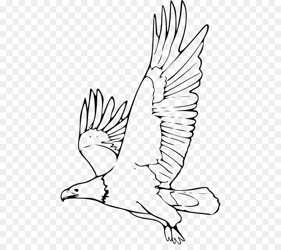 900x800 Bald Eagle Black And White Hawk Eagle Drawing Clip Art