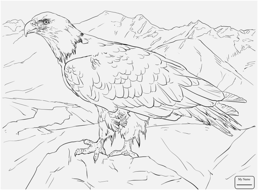 827x609 Bald Eagle Coloring Page Footage Birds Bald Eagle Attack Eagle
