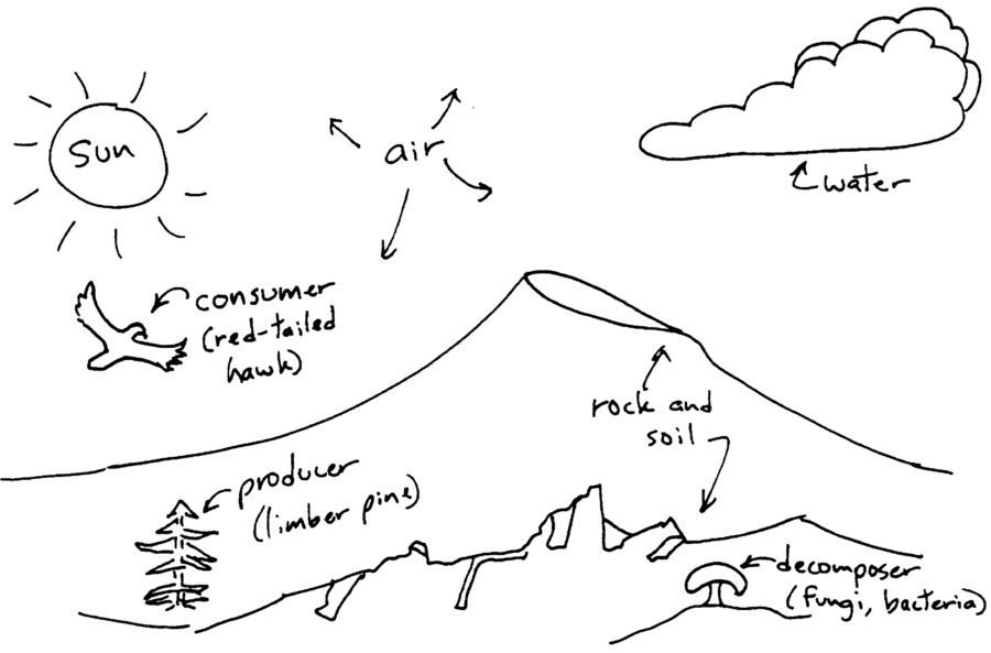 Ecosystem Drawing With Labels