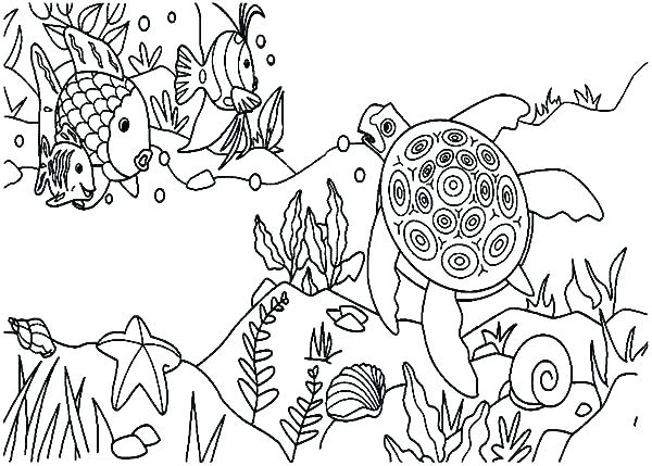 Ecosystem Drawing With Labels At Getdrawings Com
