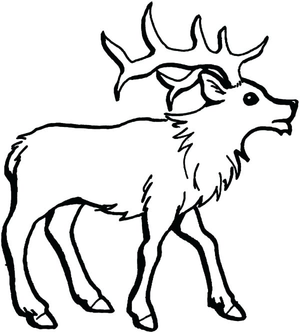 600x666 Elk Coloring Page How To Draw An Elk Coloring Pages Elk Head