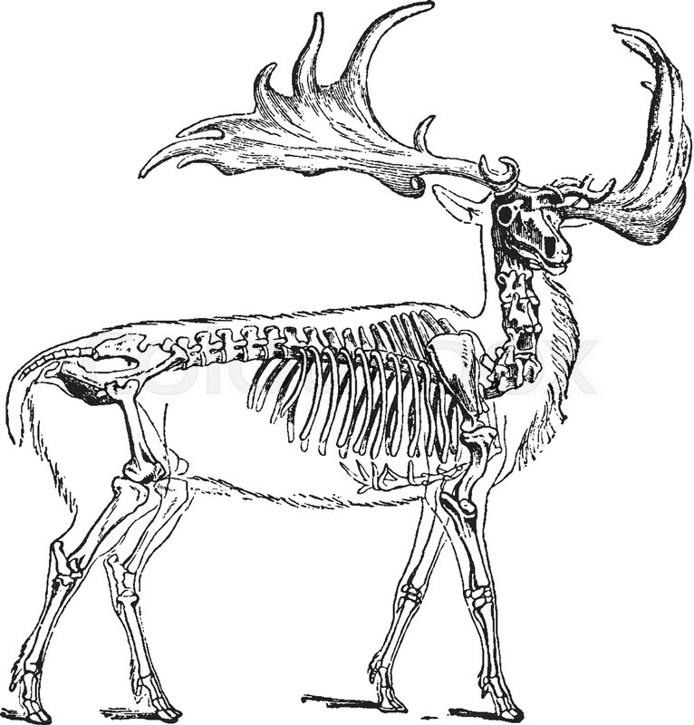 766x800 Irish Elk Also Called The Giant Deer Or Irish Giant Deer Is