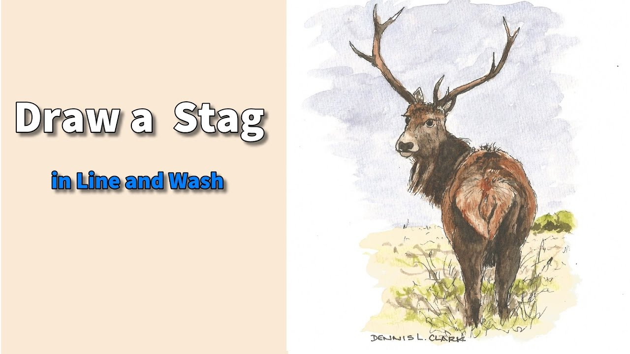 Elk Line Drawing at GetDrawings com | Free for personal use