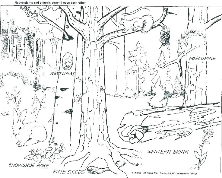 736x590 Coloring Pages Forest Flowers Printable Deer