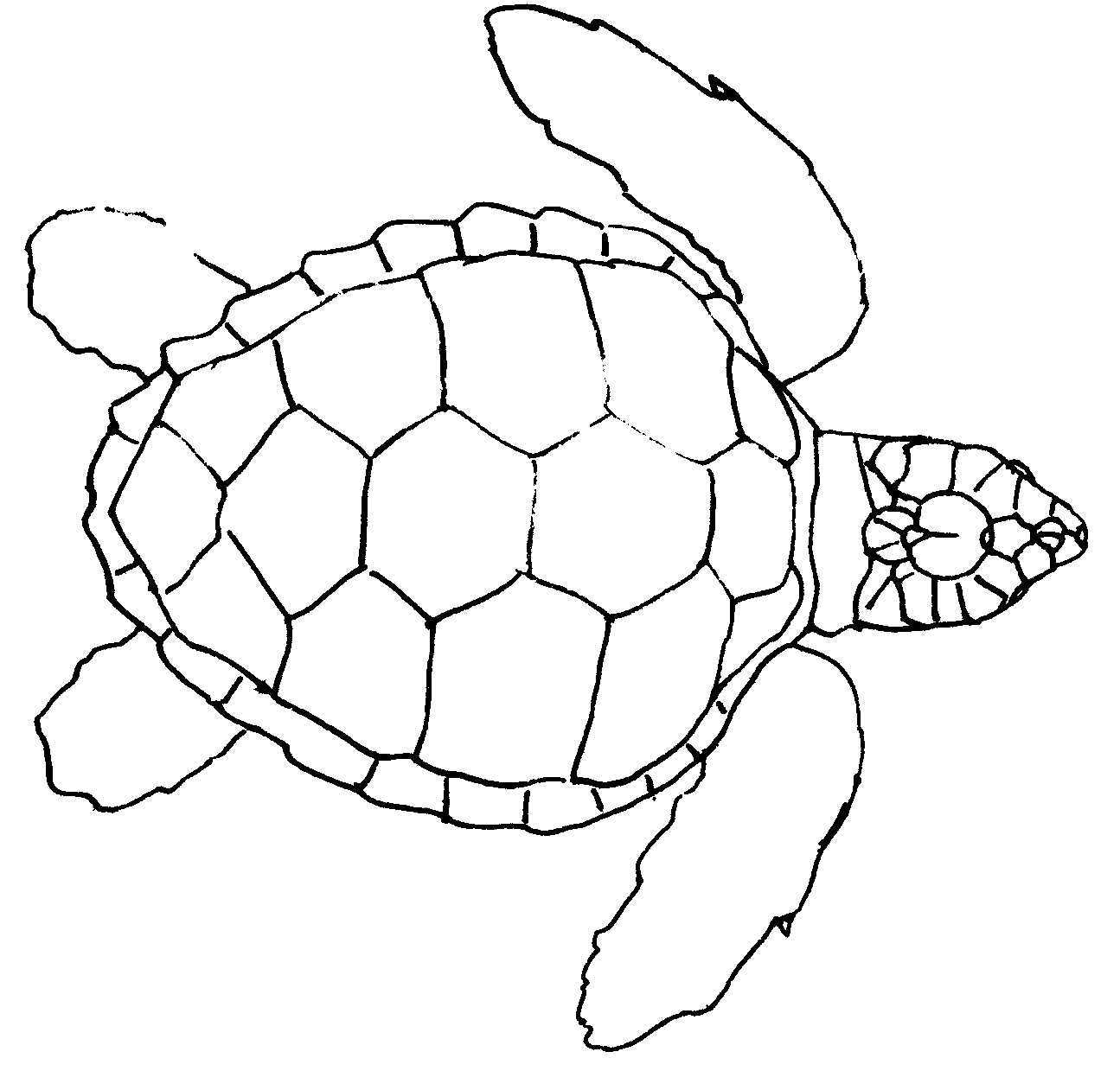 1295x1261 Expert Outline Of Turtle Simple Drawing Coloring Pages For Kids