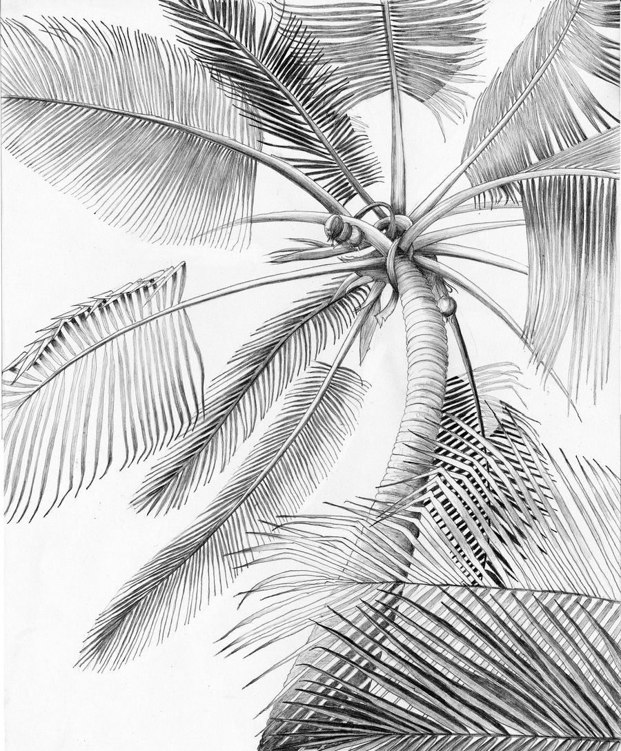 900x1088 Drawing Of A Palm Tree